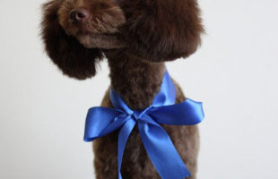 http://www.dog-and-sea.com/wp/wp-content/uploads/blog_import_57a29d0de9491.jpg