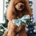 http://www.dog-and-sea.com/wp/wp-content/uploads/blog_import_57a29eca23902.jpg