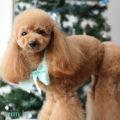 http://www.dog-and-sea.com/wp/wp-content/uploads/blog_import_57a29ed373b98.jpg