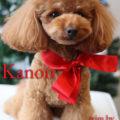 http://www.dog-and-sea.com/wp/wp-content/uploads/blog_import_57a29eda9ff51.jpg