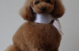 http://www.dog-and-sea.com/wp/wp-content/uploads/blog_import_57a29f9170e9e.jpg
