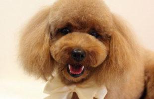 http://www.dog-and-sea.com/wp/wp-content/uploads/blog_import_57a2a5eca59bf.jpg