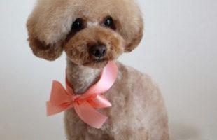 http://www.dog-and-sea.com/wp/wp-content/uploads/blog_import_57a2a6e674a8a.jpg