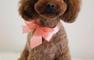 http://www.dog-and-sea.com/wp/wp-content/uploads/blog_import_57a2a7085e506.jpg