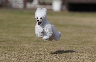 飛行犬pinky