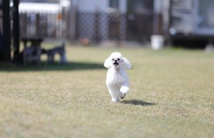 走るpinky