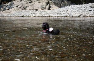川で遊ぶクリスティー