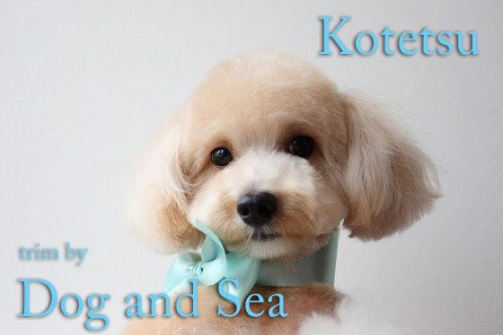 高知のトリミングサロンDog and Sea's dialy