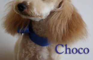 http://www.dog-and-sea.com/wp/wp-content/uploads/blog_import_57a29d146679e.jpg