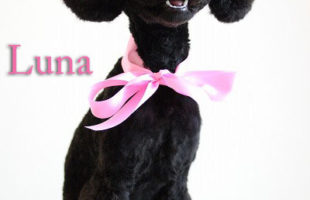 http://www.dog-and-sea.com/wp/wp-content/uploads/blog_import_57a29d92b81d7.jpg