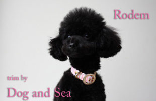 http://www.dog-and-sea.com/wp/wp-content/uploads/blog_import_57a29db15a307.jpg