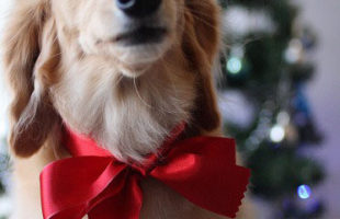 http://www.dog-and-sea.com/wp/wp-content/uploads/blog_import_57a29f2852493.jpg
