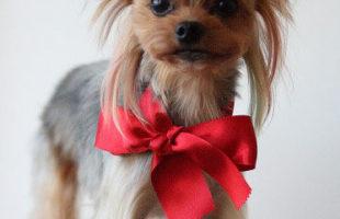 http://www.dog-and-sea.com/wp/wp-content/uploads/blog_import_57a29f3f3653e.jpg