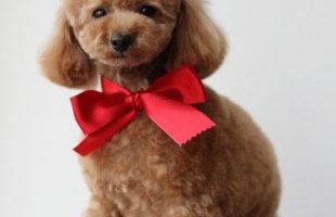 http://www.dog-and-sea.com/wp/wp-content/uploads/blog_import_57a29f49b6e49.jpg