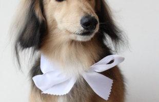 http://www.dog-and-sea.com/wp/wp-content/uploads/blog_import_57a29f9aa2698.jpg