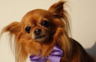 http://www.dog-and-sea.com/wp/wp-content/uploads/blog_import_57a2a0e366fad.jpg
