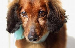 http://www.dog-and-sea.com/wp/wp-content/uploads/blog_import_57a2a0e89b905.jpg