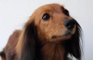 http://www.dog-and-sea.com/wp/wp-content/uploads/blog_import_57a2a0ec3735e.jpg