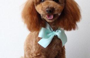 http://www.dog-and-sea.com/wp/wp-content/uploads/blog_import_57a2a0ef3b9c8.jpg