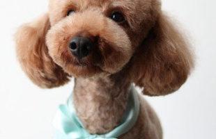 http://www.dog-and-sea.com/wp/wp-content/uploads/blog_import_57a2a142183e3.jpg