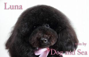 http://www.dog-and-sea.com/wp/wp-content/uploads/blog_import_57a2a1b89da4a.jpg