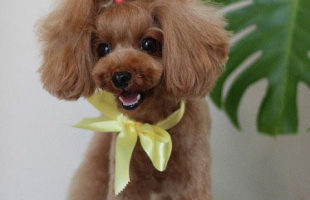 http://www.dog-and-sea.com/wp/wp-content/uploads/blog_import_57a2a24ea78cc.jpg