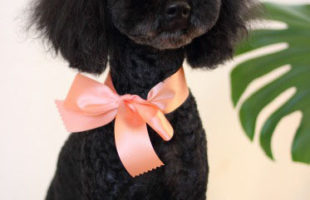 http://www.dog-and-sea.com/wp/wp-content/uploads/blog_import_57a2a3e836ef9.jpg