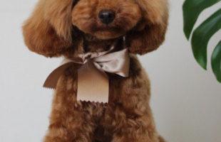 http://www.dog-and-sea.com/wp/wp-content/uploads/blog_import_57a2a3f836f3b.jpg