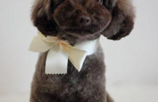 http://www.dog-and-sea.com/wp/wp-content/uploads/blog_import_57a2a5b49c34c.jpg