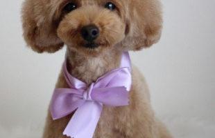 http://www.dog-and-sea.com/wp/wp-content/uploads/blog_import_57a2a7ea4282b.jpg