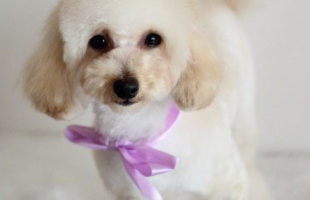 http://www.dog-and-sea.com/wp/wp-content/uploads/blog_import_57a2a8c403da8.jpg